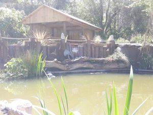 Gazebo_pond_area
