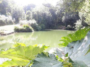 Lodgeside_lake