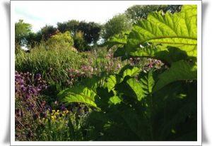 Green Fields - Woodlay